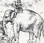 Hanno the Elephant (1510-16)