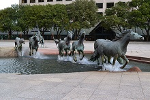 Mustangs of Las Colinas, 1984