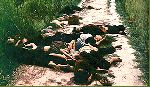 My Lai Massacre, Mar. 16, 1968
