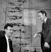 James D. Watson (1928-) and Francis H.C. Crick (1916-2004)