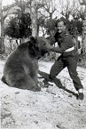 Wojtek the Bear (1942-63)